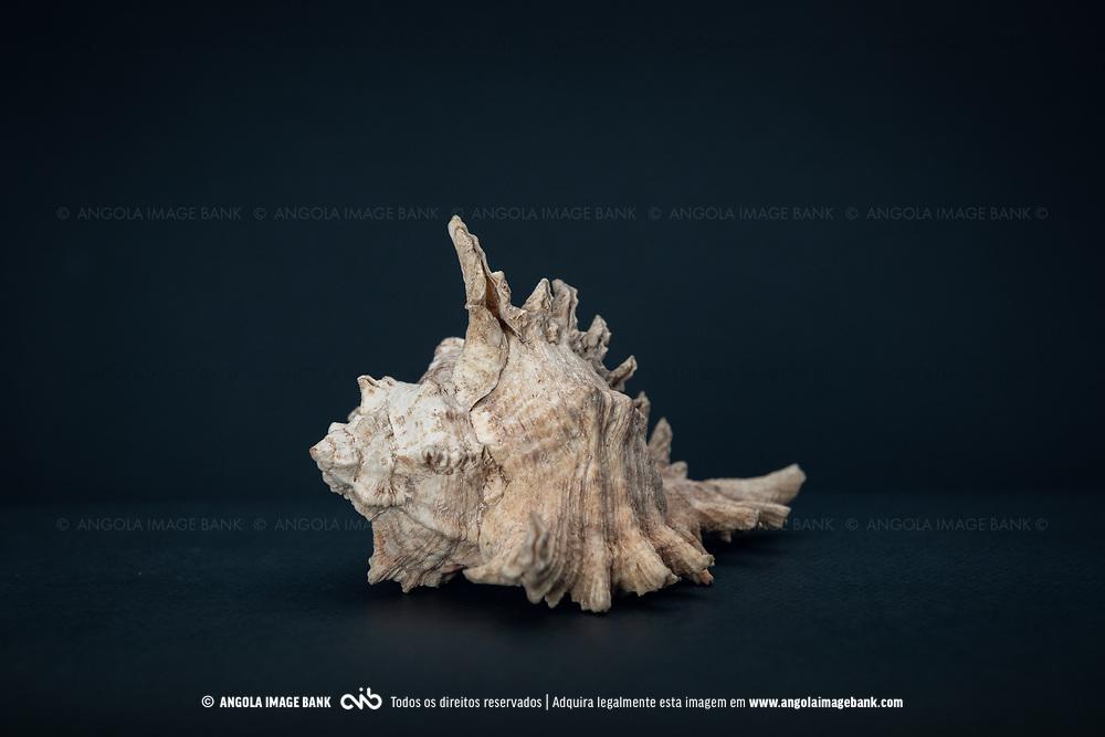 Artesanato de Angola. Conchas do mar, oceano Atlántico, Angola.