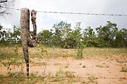 Baldim_MG, Brasil...Cobra morta em uma cerca de arame farpado em Baldim, Minas Gerais...The died snake on the barbed wire in Baldim, Minas Gerais...Foto: LEO DRUMOND / NITRO
