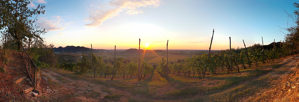 Sun Rising Over Vineyard Arqua Petrarca Italy