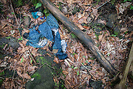 An arm bone under a jacket lies on the ground near a jacket in Aokigahara Jukai, better known as the Mt. Fuji suicide forest.