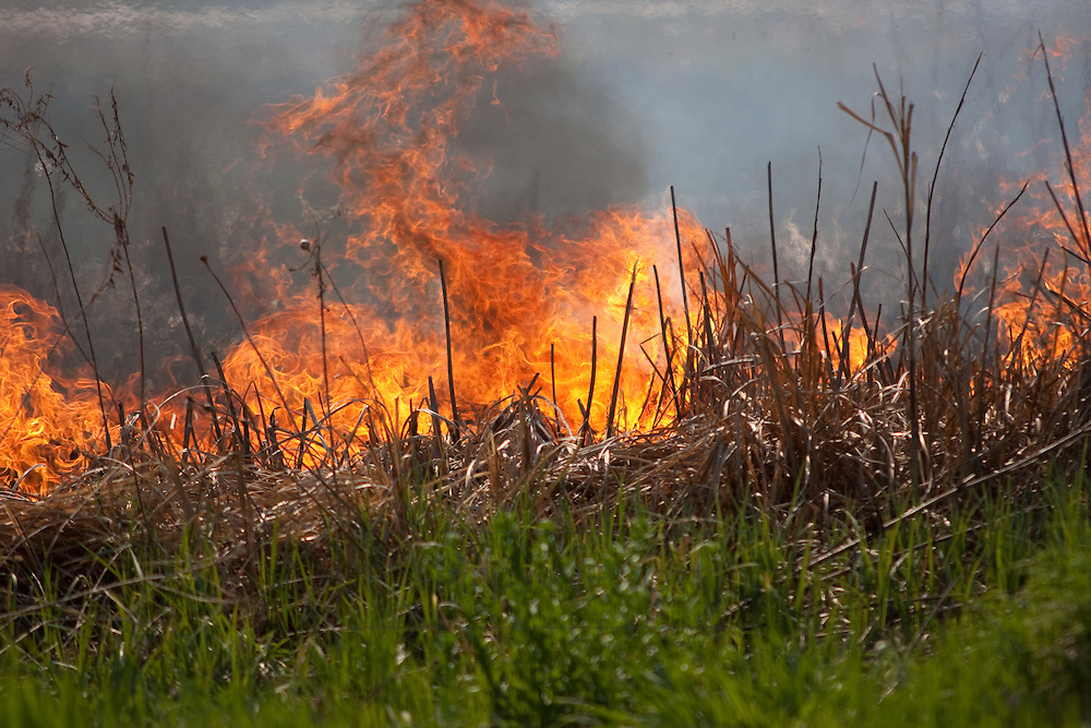 Fire is used annually to burn dry thatch and brush in effort to refresh the ground for native prairie plant germination near Lake Nokomis in Minneapolis.