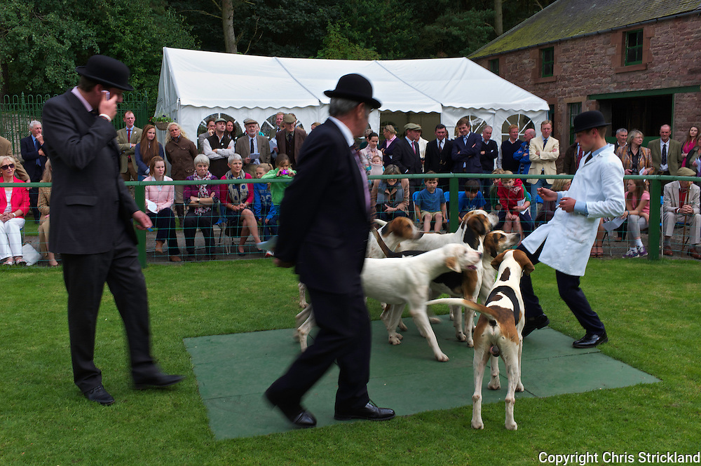 The new entry is judged at the Jedforest Hunt Puppy Show by Charlie Shirley Bevan MFH of the Tynedale Hunt and former Master & Huntsman of the Jed Watt Jeffrey.
