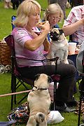 Sarah Hattrell eating cake. Pug Dog club Tea party held at Cottesbrook Hall.  ( home of  Mr. and Mrs. Alastair Macdonald-Buchanan ) 26 June 2005. . ONE TIME USE ONLY - DO NOT ARCHIVE  © Copyright Photograph by Dafydd Jones 66 Stockwell Park Rd. London SW9 0DA Tel 020 7733 0108 www.dafjones.com