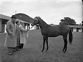 1953 - September Bloodstock, Horse Sales at the RDS
