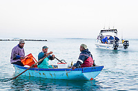 Small-scale commercial fishers returning to shore in their wooden rowing boat, Struisbaai, Western Cape, South Africa