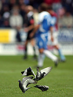 Photo: Paul Thomas.<br /> Wigan Athletic v Aston Villa. The Barclays Premiership. 19/11/2006.<br /> <br /> Some Pigeons play on the pitch during the game.