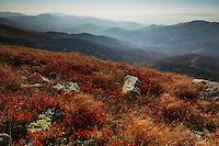 View over the Tarcu Mountains Natura 2000 site. Southern Carpathians, Munții Ṭarcu, Caraș-Severin, Romania.