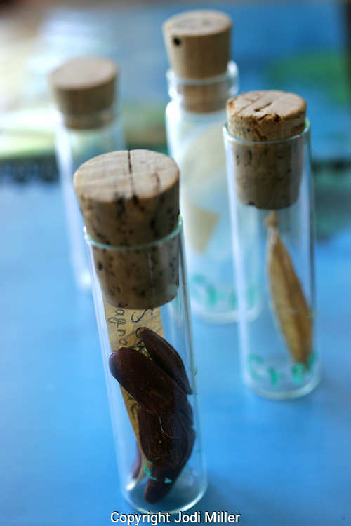 Glass vials of seed samples on blue.