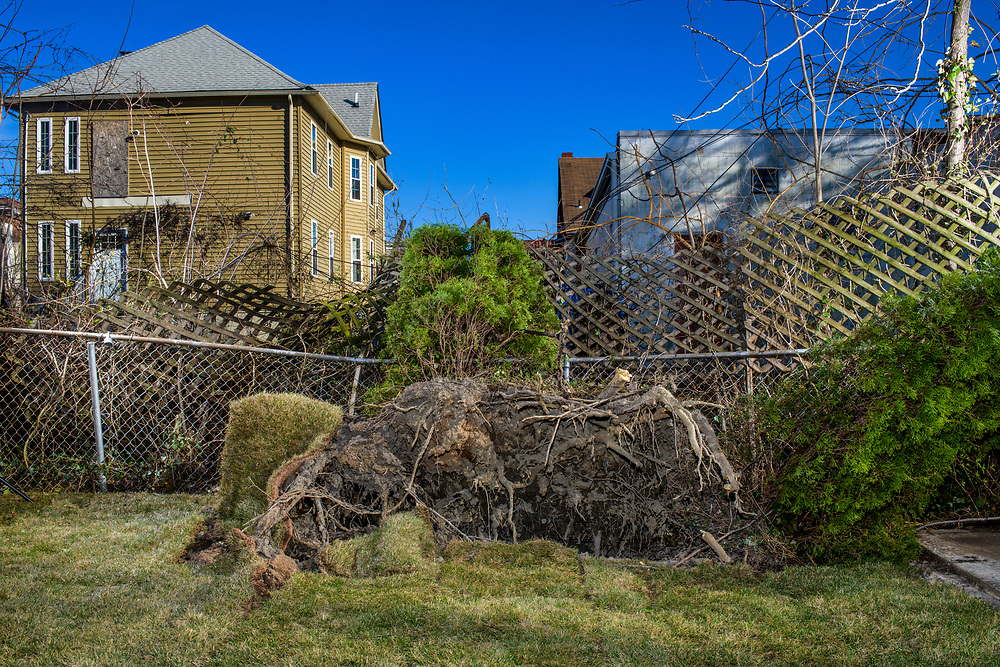 Baltimore, Maryland - March 05, 2018: Winds from a Nor'easter uprooted a bush in our backyard, and displaced newly laid sod.<br /> CREDIT: Matt Roth