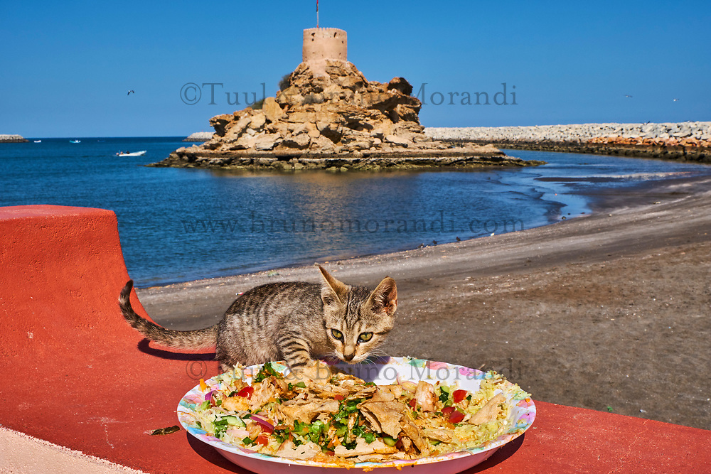 Sultanat d'Oman, gouvernorat de Muscate, Quriyat, village de pêcheur, chat des rues // Sultanat of Oman, Gulf of Oman, Mascat, Quriyat District, Quriyat, a fishing village, beach and watchtower, street cat