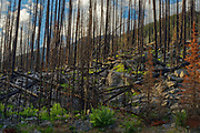 Forest burn, Jasper National Park, Alberta, Canada