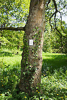 A tree with a light switch on it outdoors in a park / forest setting.