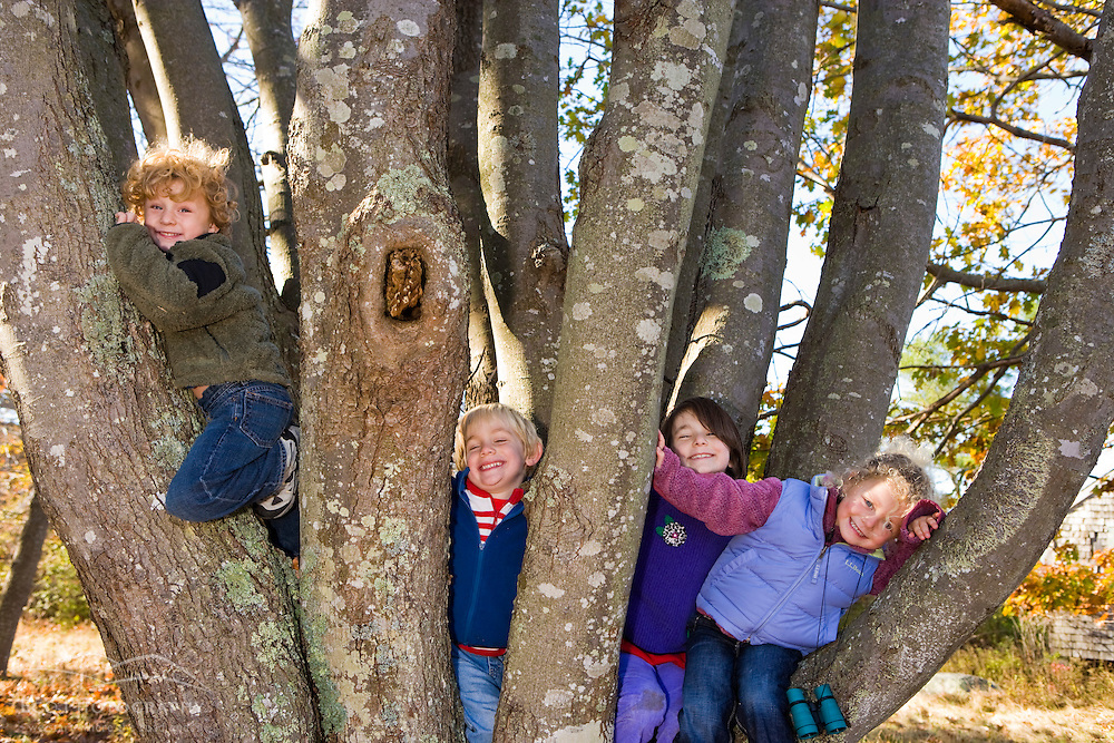 Four kids (ages 4 and 6) climb a tree in Biddeford, Maine.  Timber Point.
