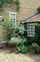cobbled patio with a collection of container plants