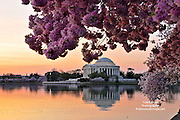 Sunrise on the Potomac at the Tidal Basin.  Cherry Blossoms at The Thomas Jefferson Memorial. <br /> <br /> Photo by John Drew<br /> Professional Image Photography<br /> <br /> #CherryBlossoms, #Tidalbasin, #Professionalimage