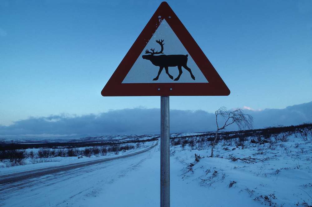 Norway, Reindeer crossing sign on road near the arctic town of Kirkennes in northern Norway in early November