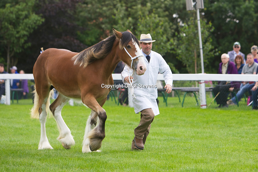Mr D &amp; Mrs S Ferrie's bay filly  Goodsburn Lucky April<br /> 1 year old<br /> Sire  Bogton Flying Scot<br /> 3rd  Filly or Gelding, yearling or 2 year old class