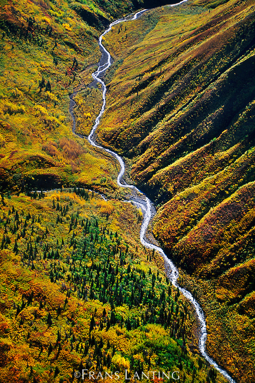 Fall colors in tundra valley (aerial), Wrangell-St. Elias National Park, Alaska