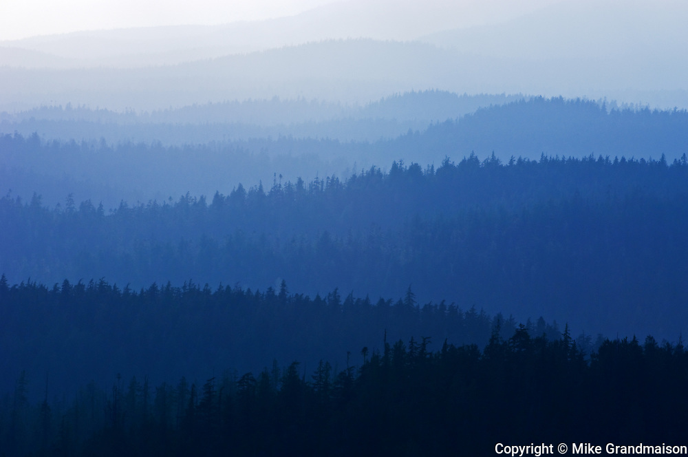 temperate coastal rain forest <br /> at edge of Carmanah-Walbran Provincial Park<br /> British Columbia<br /> Canada