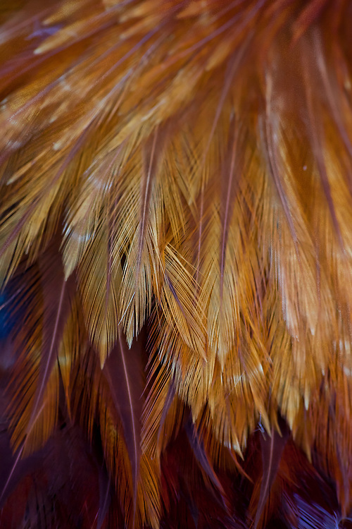 Brightly colored feathers make an abstract design