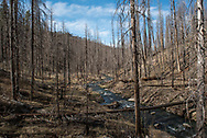 2017 APR 06: Gila Trout spawn survey with the New Mexico Game and Fish department on Willow Creek in the Gila National Forest near Reserve, New Mexico.