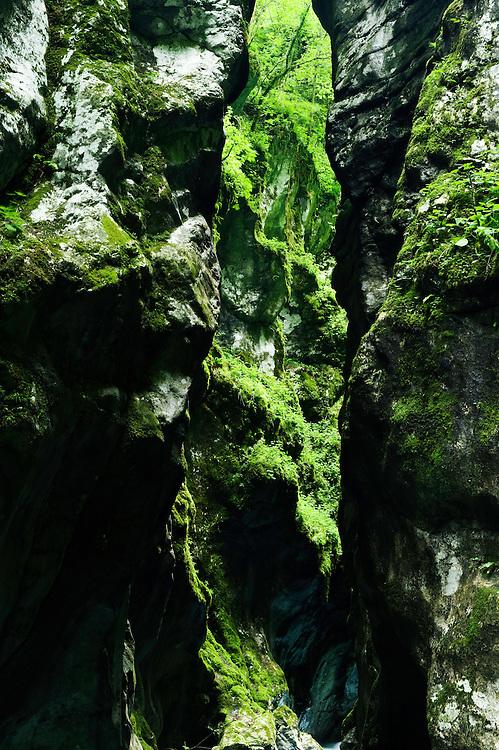 Tolminka canyon (Tolminska korita)<br /> Triglav National Park, Slovenia<br /> June 2009