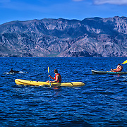Kayaking among dolphins. Loreto. Baja California Sur, Mexico.