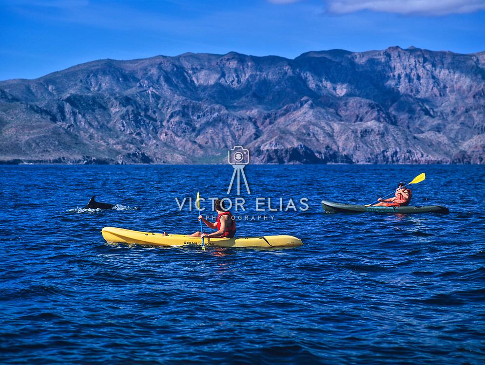 Kayaking among dolphins. Loreto. Baja California Sur, Mexico.