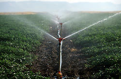 TURKEY VIRANSEHIR JUL02 - Water sprinklers wet agricultural land in the Syrian plain...jre/Photo by Jiri Rezac..© Jiri Rezac 2002..Contact: +44 (0) 7050 110 417.Mobile:  +44 (0) 7801 337 683.Office:  +44 (0) 20 8968 9635..Email:   jiri@jirirezac.com.Web:     www.jirirezac.com