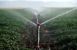 TURKEY VIRANSEHIR JUL02 - Water sprinklers wet agricultural land in the Syrian plain...jre/Photo by Jiri Rezac..© Jiri Rezac 2002..Contact: +44 (0) 7050 110 417.Mobile:  +44 (0) 7801 337 683.Office:  +44 (0) 20 8968 9635..Email:   jiri@jirirezac.com.Web:     www.jirirezac.com