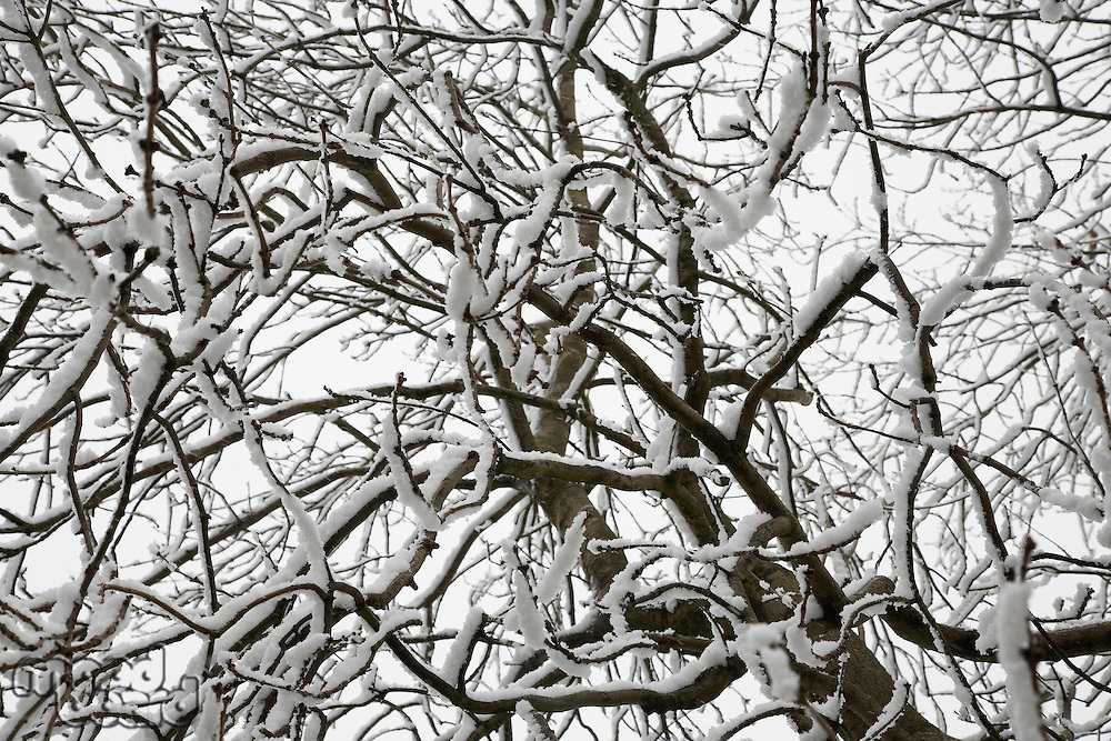 Close-up of snow covered tree branches