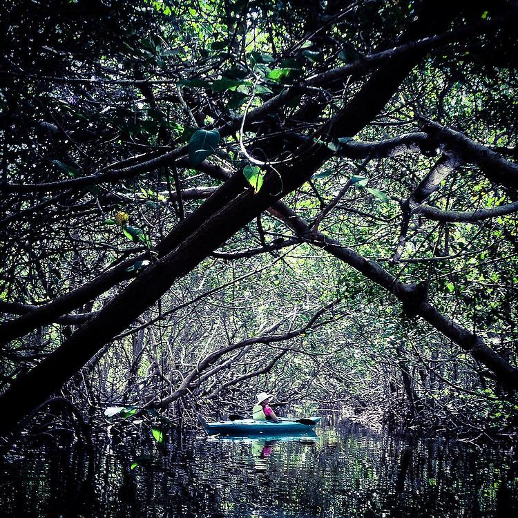 Kayaking in the mangrove tunnels at Robinson Preserve, Bradenton, Florida
