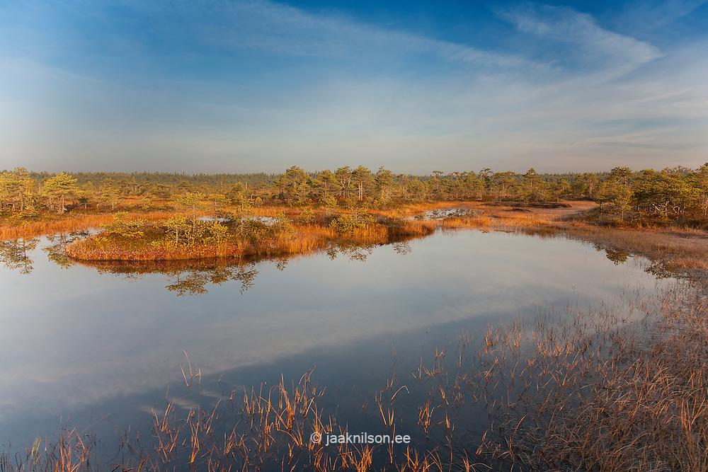 Autumn in  Männikjärve Bog, Endla Nature Reseve, Jõgeva County, Estonia