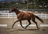Horse No 35