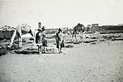 western women in the desert on the outskirts of Sale / Rabat posing with grazing camels Morocco 1930s