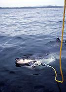 Mackerel Sharks - White Sharks