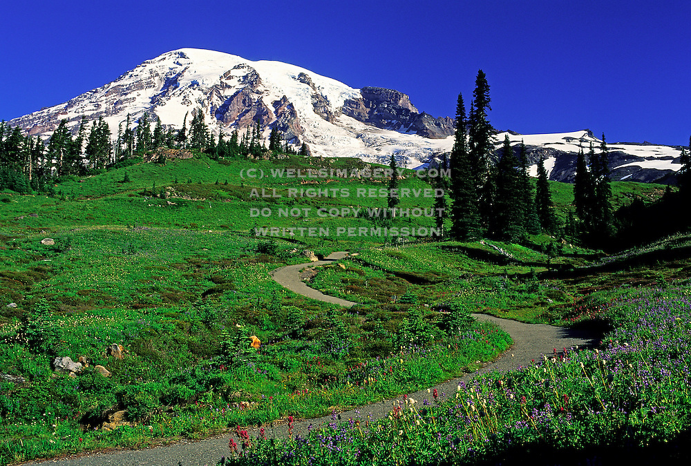 Image of Mount Rainier with hiking trail near Paradise, Mount Rainier National Park, Washington, Pacific Northwest