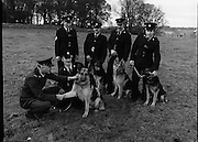 New Garda Dogs.   (N2)..1979..22.11.1979..11.22.1979..22nd November 1979..Today saw the passing out of four new Garda Dogs for the Garda Canine unit.The event was held at the Royal Hospital, Kilmainham..Image of the commissioner meeting Duke and his handler Garda Thomas Donnelly as Sergeant Brendan Maher,Wexford who is in charge of the canine unit, Garda Pat Griffin, Tralee,Co Kerry with 'Sam', Garda Vincent Turner, Limerick with 'Glenn'and Garda John Culkin, Ballina,Co Mayo with 'Rover' look on.