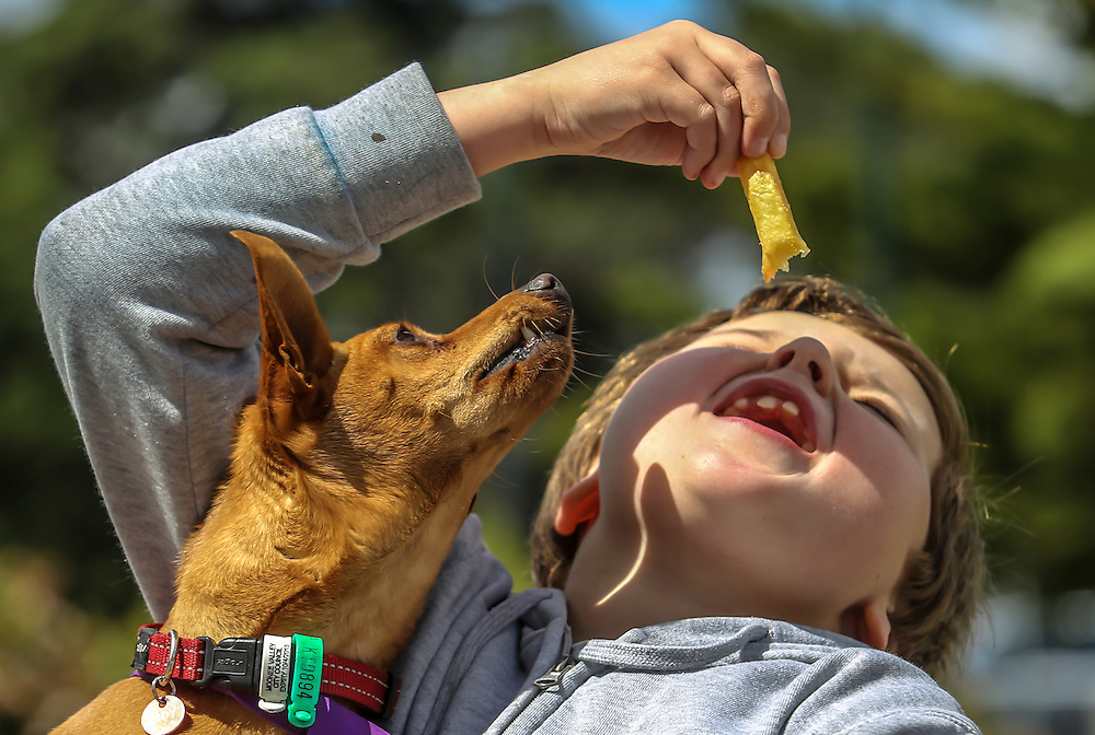 A boy's dog tries to steel fries from the boy melbourne photographers, commercial photographers, industrial photographers, corporate photographer, architectural photographers, This photograph can be used for non commercial uses with attribution. Credit: Craig Sillitoe Photography / http://www.csillitoe.com<br />