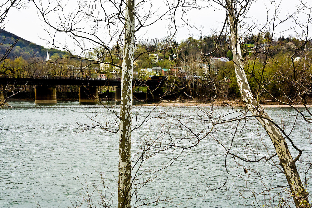 Two slim sycamore tree trunks define the foreground of this view across the  river.  Railroad bridge on the left.  Winter, cold weather.