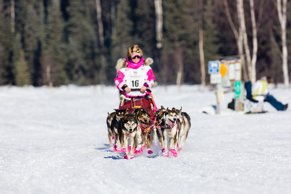 Musher DeeDee Jonrowe competing in the 42nd Iditarod Trail Sled Dog Race on Long Lake after leaving the restart on Willow Lake in Southcentral Alaska.  Afternoon. Winter.
