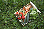 Crate of fresh vegetables on grass view from above
