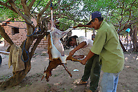 Guarani men slaughtering a goat