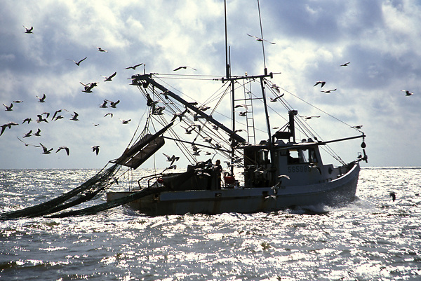 Stock photo of seagulls surrounding a shrimp boat in the Gulf of Mexico