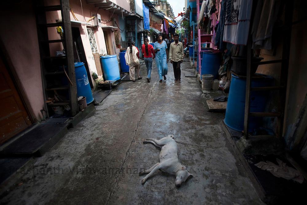 A dog sleeps in the narrow lanes of Dharavi , in Mumbai, India, Saturday, July, 18, 2009. Photographer: Prashanth Vishwanathan/Bloomberg