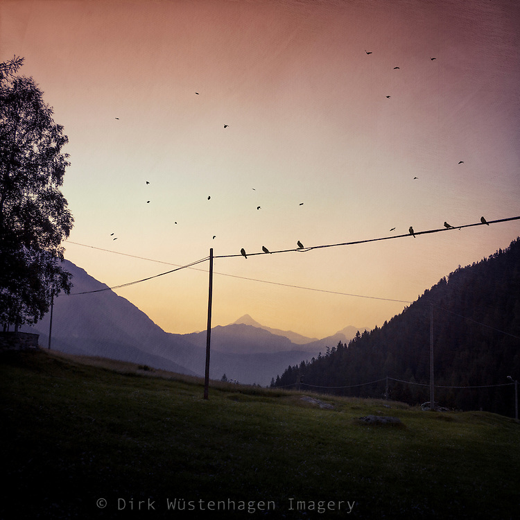 Birds on a wire at sunrise near Chiareggio in Valmalenco, Lambardia, Italy
