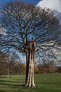 London, England, Uk, November 30 2018 - Kensington Gardens and Hyde Park.