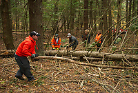 Steve Schor, Mark Horvath, Dana Farley, Amanda Schor and Sandy Ware work to clear the trails at Ramblin' Vewe Farm on Sunday morning following last weekend's storm that downed dozens of trees throughout their trail system.  (Karen Bobotas/for the Laconia Daily Sun)