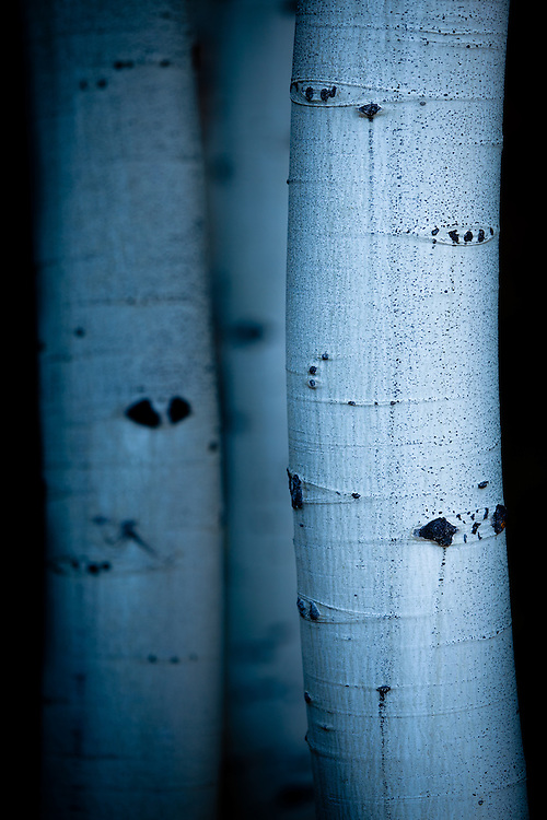 Aspen Boles. Kebler Pass in the Gunnison National Forest near Crested Butte, Colorado.