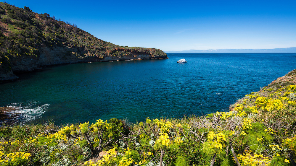 Wildflowers at Pelican Bay, Santa Cruz Island, Channel Islands National Park, California USA